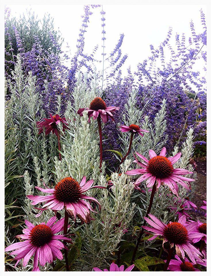 Zahrada inspirace - Obrázek č. 42