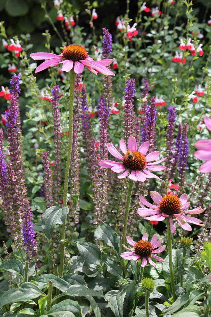 Zahrada inspirace - Obrázek č. 46