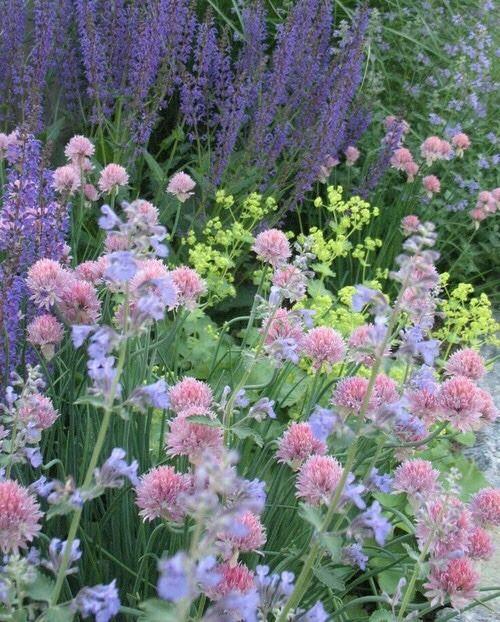 Zahrada inspirace - Obrázek č. 51