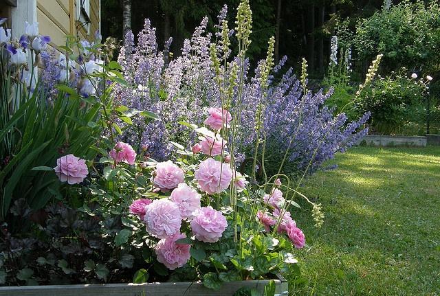Zahrada inspirace - Obrázek č. 52
