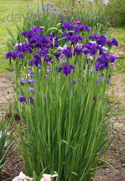 Zahrada inspirace - Obrázek č. 69