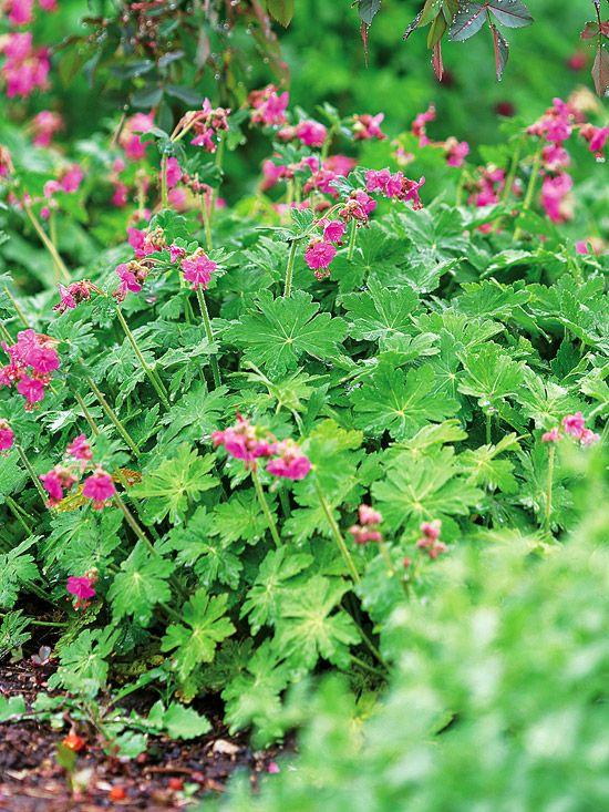 Zahrada inspirace - Obrázek č. 67