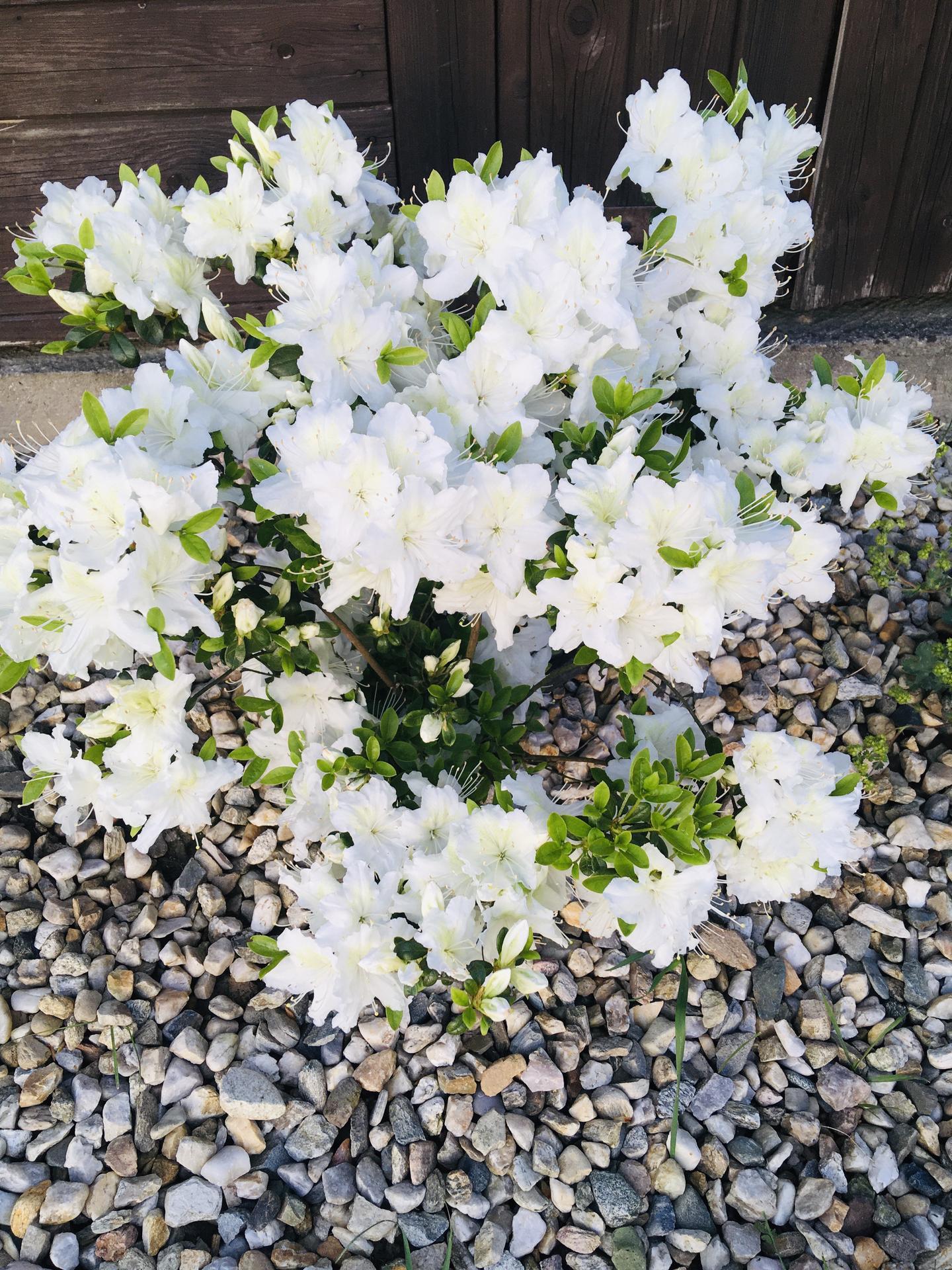Za plotem - Každý den přidá pár květů navíc 😊