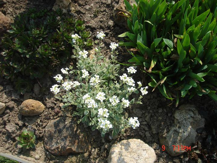 Na dvore a v záhrade - Obrázok č. 3