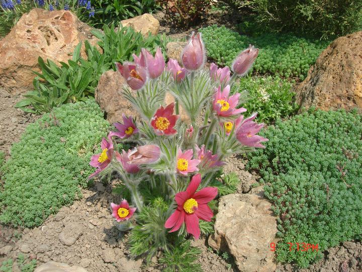 Na dvore a v záhrade - Obrázok č. 5