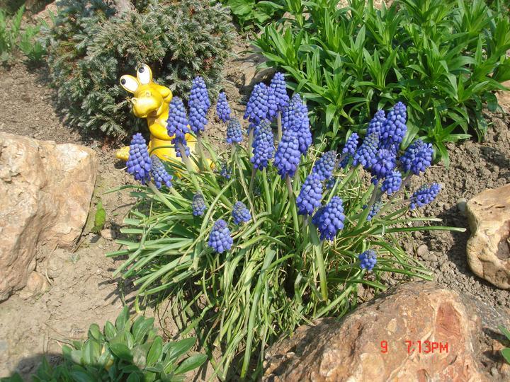 Na dvore a v záhrade - Obrázok č. 6