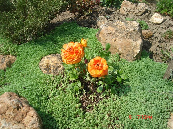 Na dvore a v záhrade - Obrázok č. 7