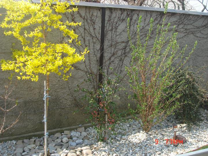 Na dvore a v záhrade - Obrázok č. 8