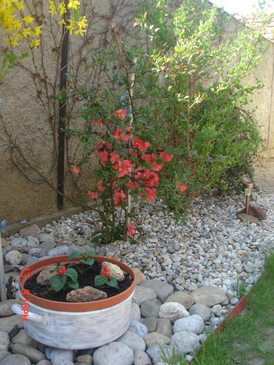Na dvore a v záhrade - Obrázok č. 12