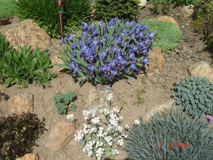 Na dvore a v záhrade - Obrázok č. 15