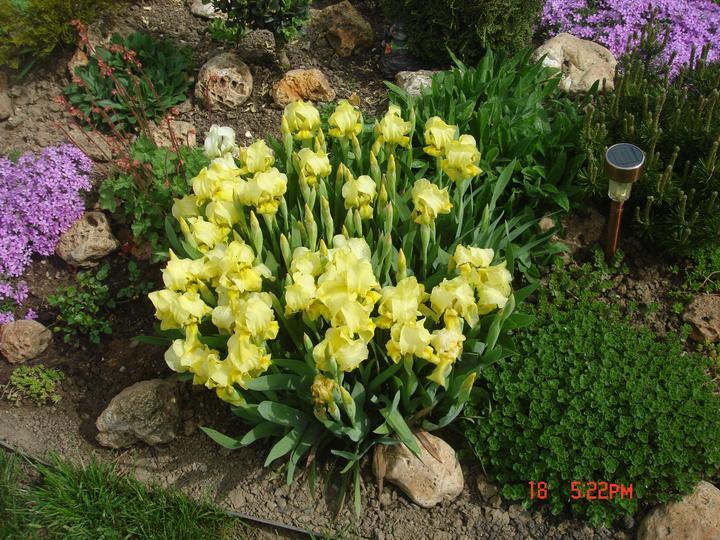 Na dvore a v záhrade - Obrázok č. 23