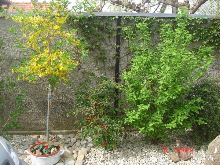 Na dvore a v záhrade - Obrázok č. 30