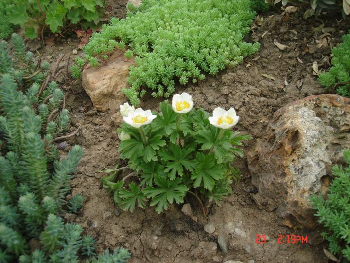 Na dvore a v záhrade - Obrázok č. 34