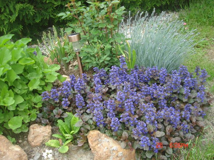 Na dvore a v záhrade - troška modrej...