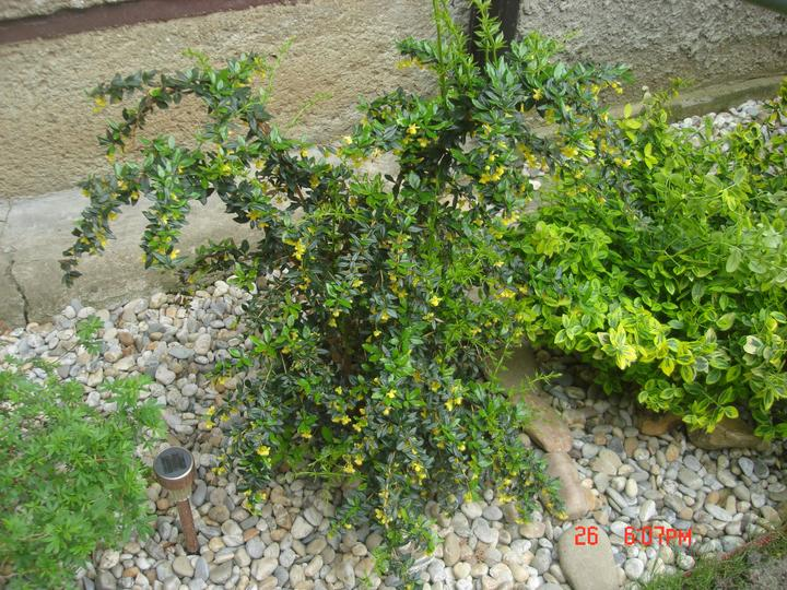 Na dvore a v záhrade - všetko pekne raší a kvitne....