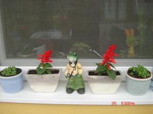 bazalka zo semiačka a šalvie, žabiak darček od syna ..... trošku moderný ale čo už:))