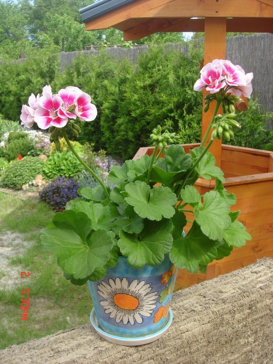 Na dvore a v záhrade - tak tomuto som neodolala na trhu....