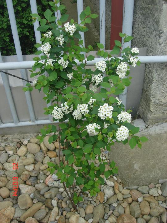 Na dvore a v záhrade - Obrázok č. 50