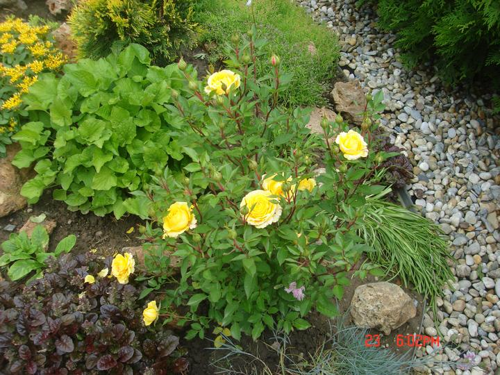 Na dvore a v záhrade - Obrázok č. 53