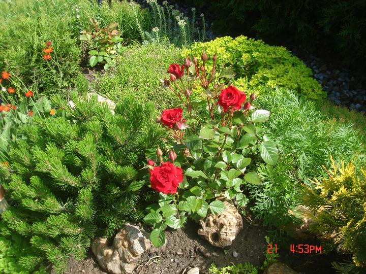 Na dvore a v záhrade - Obrázok č. 56