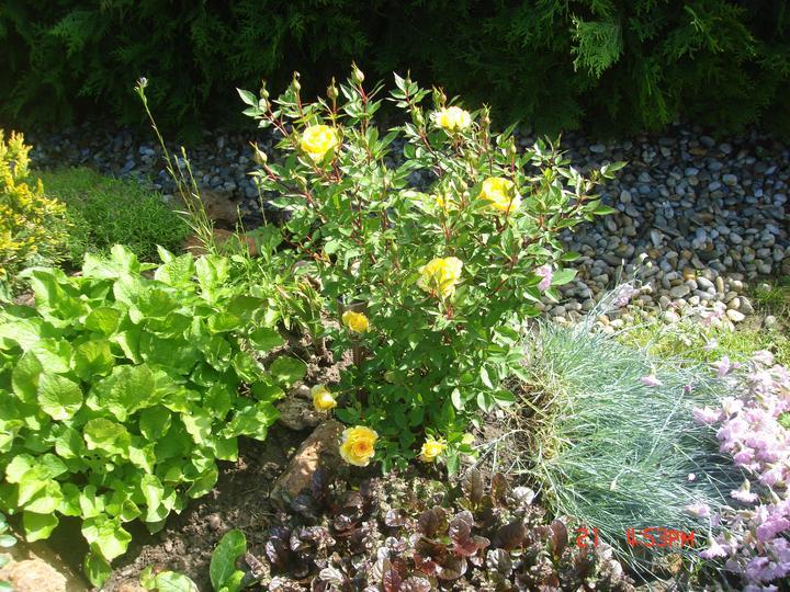 Na dvore a v záhrade - Obrázok č. 57