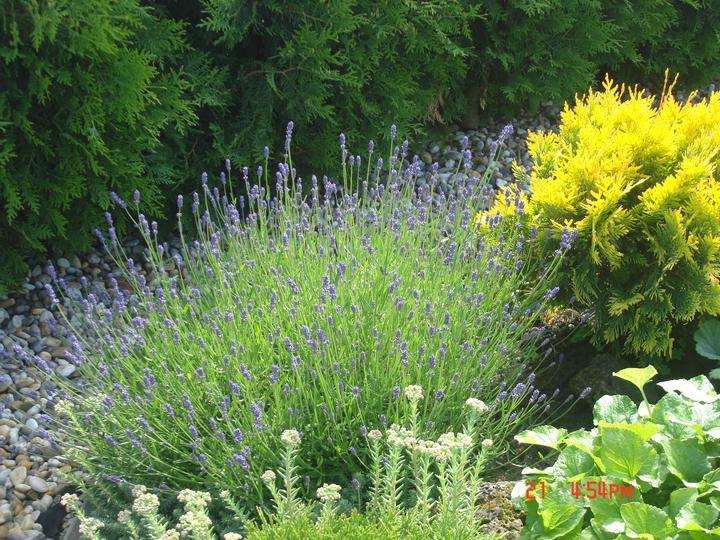 Na dvore a v záhrade - Obrázok č. 59