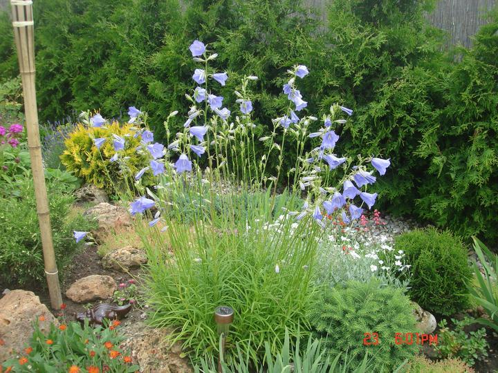 Na dvore a v záhrade - Obrázok č. 62
