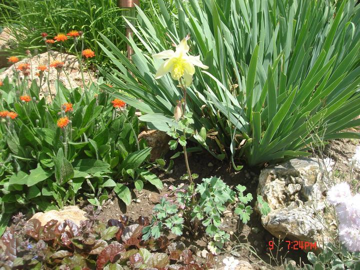 Na dvore a v záhrade - kto vie ako sa tento kvietok volá?