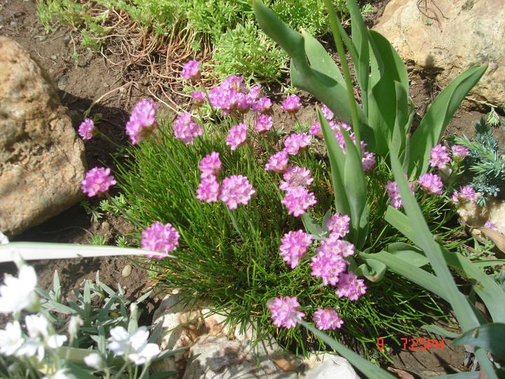Na dvore a v záhrade - Obrázok č. 66