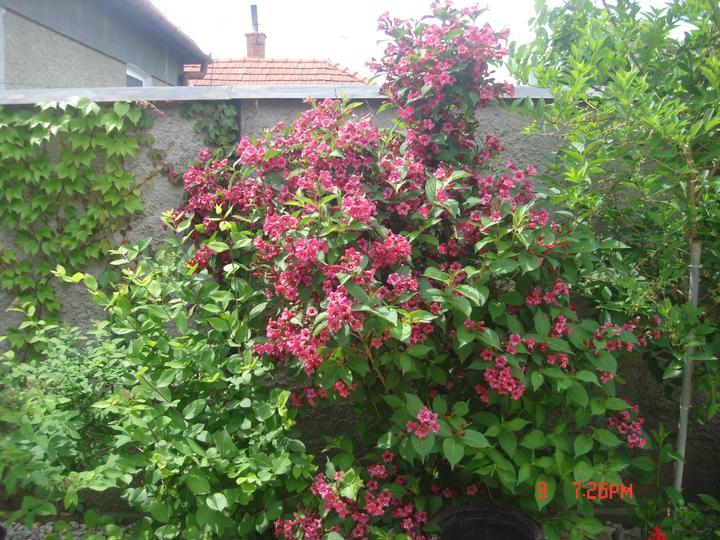 Na dvore a v záhrade - Obrázok č. 67