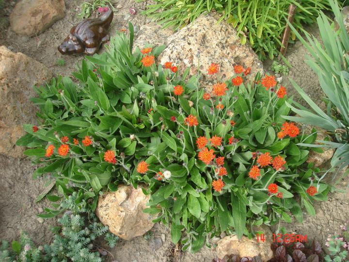 Na dvore a v záhrade - Obrázok č. 69