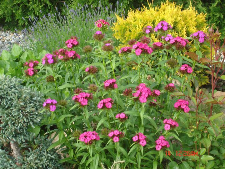 Na dvore a v záhrade - Obrázok č. 70