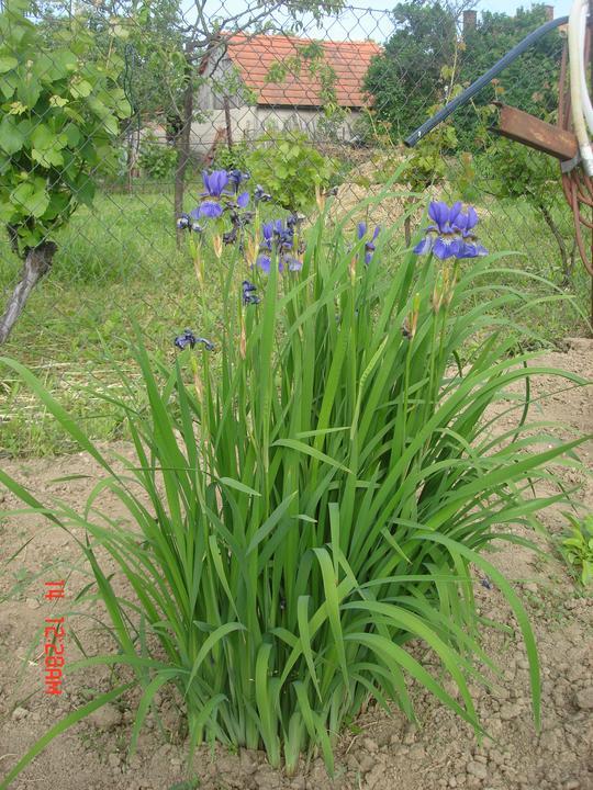 Na dvore a v záhrade - Obrázok č. 71