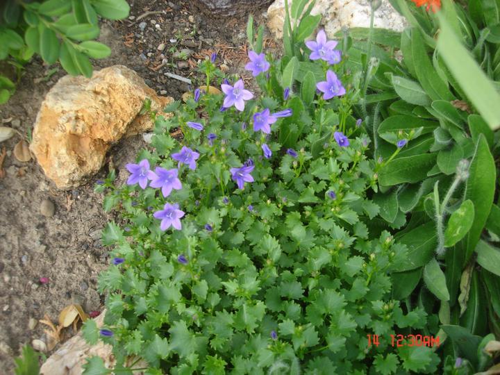 Na dvore a v záhrade - Obrázok č. 73