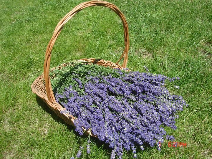 Na dvore a v záhrade - moja prvá úroda:))