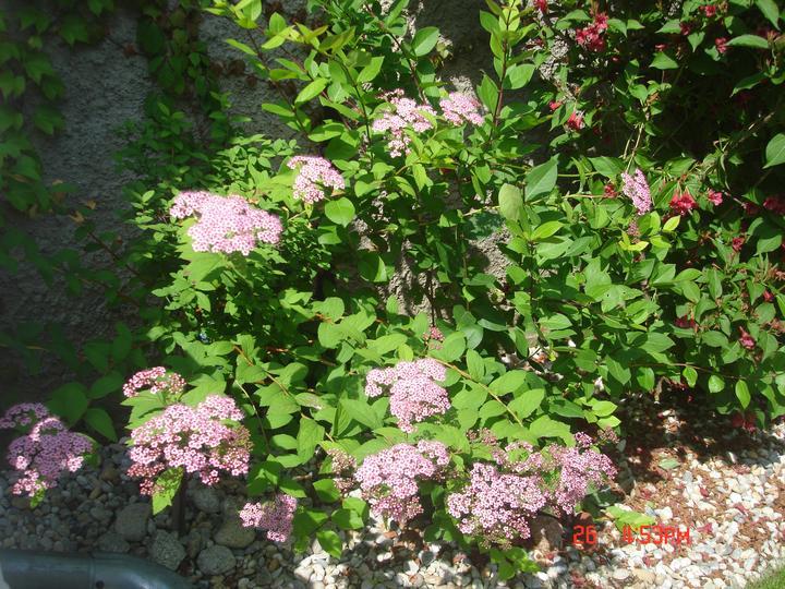 Na dvore a v záhrade - Obrázok č. 87