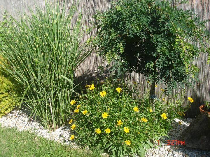 Na dvore a v záhrade - Obrázok č. 88