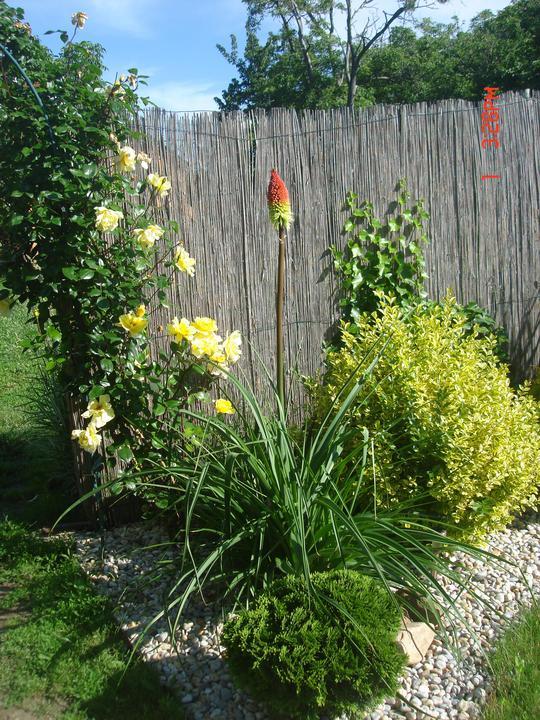 Na dvore a v záhrade - prvý krát kvitne:)) teším sa:))