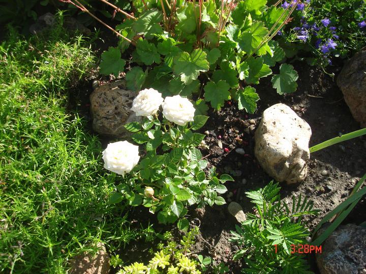 Na dvore a v záhrade - Obrázok č. 90