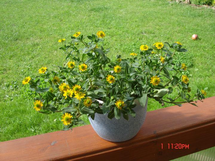 Na dvore a v záhrade - Obrázok č. 94