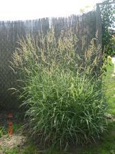 moje trávy, tento rok rastu ako divé, toľko dažďa im prospelo.....