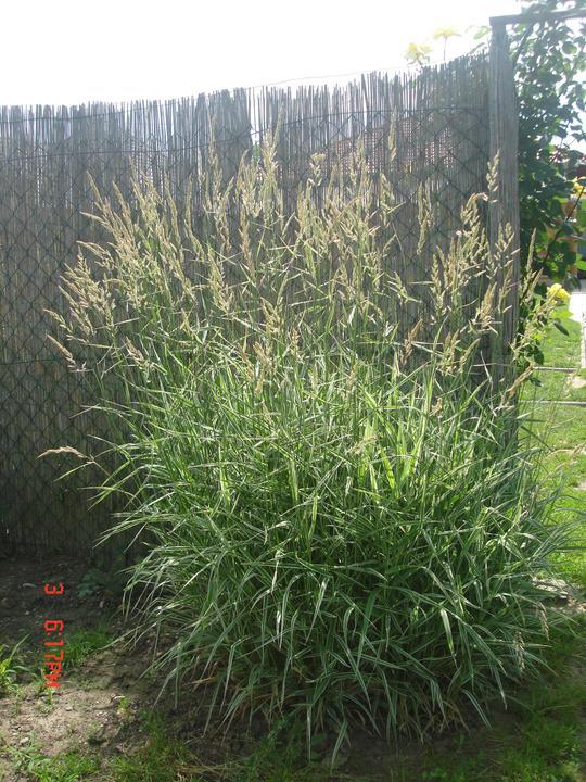 Na dvore a v záhrade - moje trávy, tento rok rastu ako divé, toľko dažďa im prospelo.....