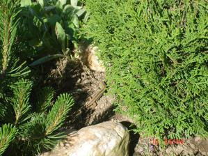 jašteričky máme miesto domácich zvieratiek:)