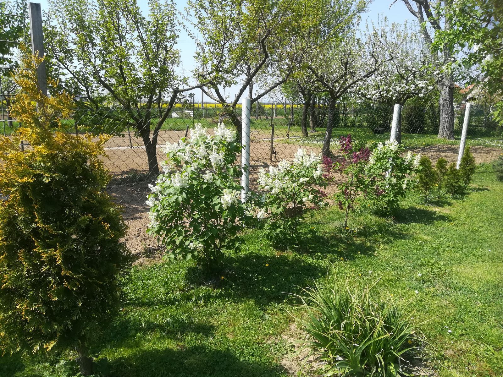 Na dvore a v záhrade - Obrázok č. 378