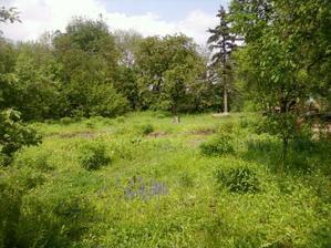 Kveten 2010 - v dzungli trav