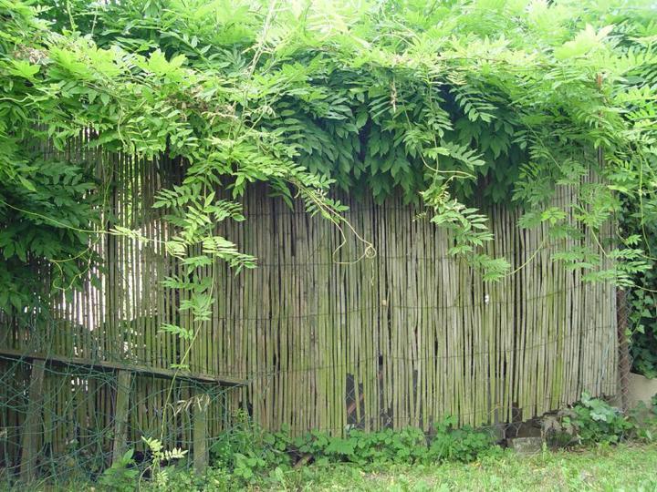 Bydleni v zahrade - Vistarka na plote