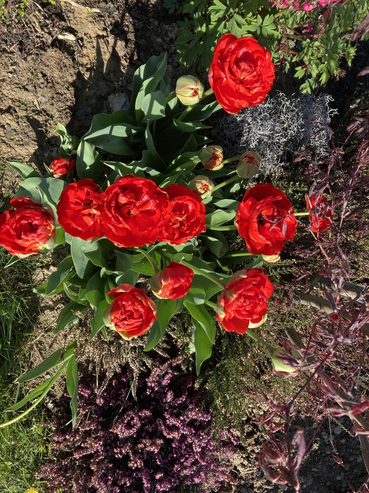 Šestý rok zahradničím - dneska je konečně nádherný den, den matek budeme grilovat