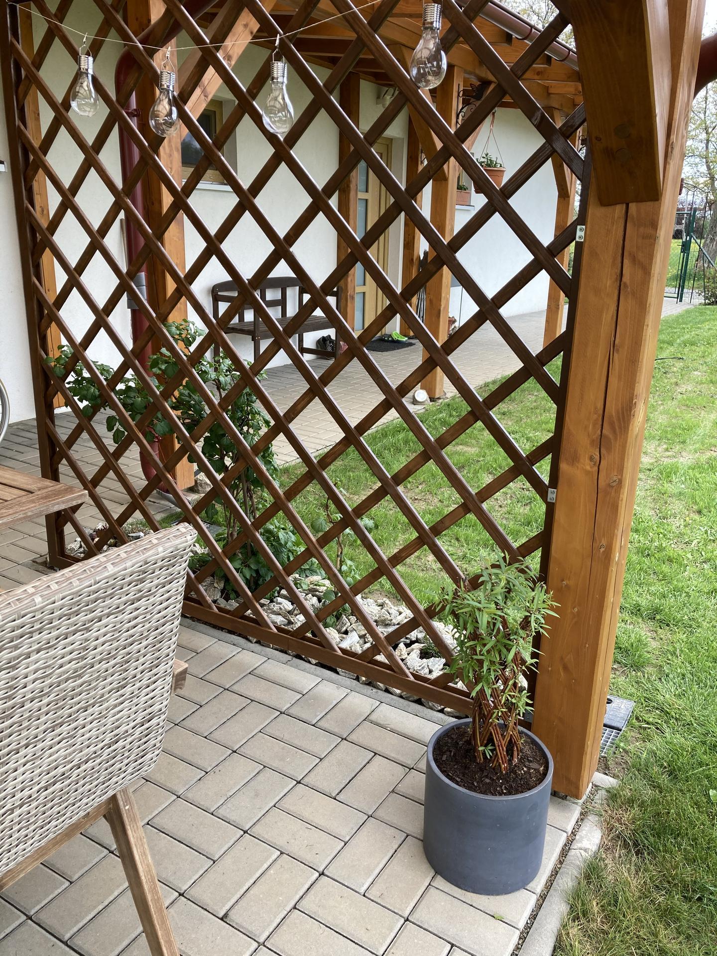 Šestý rok zahradničím - vrba z Kauflandu za pár kaček