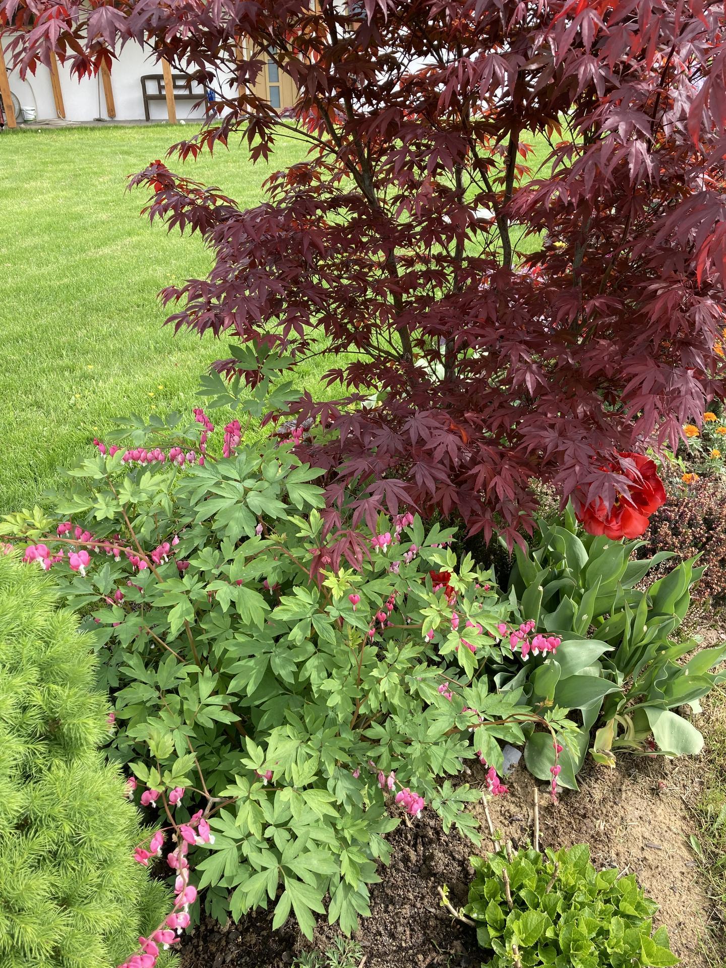 Šestý rok zahradničím - Obrázek č. 30