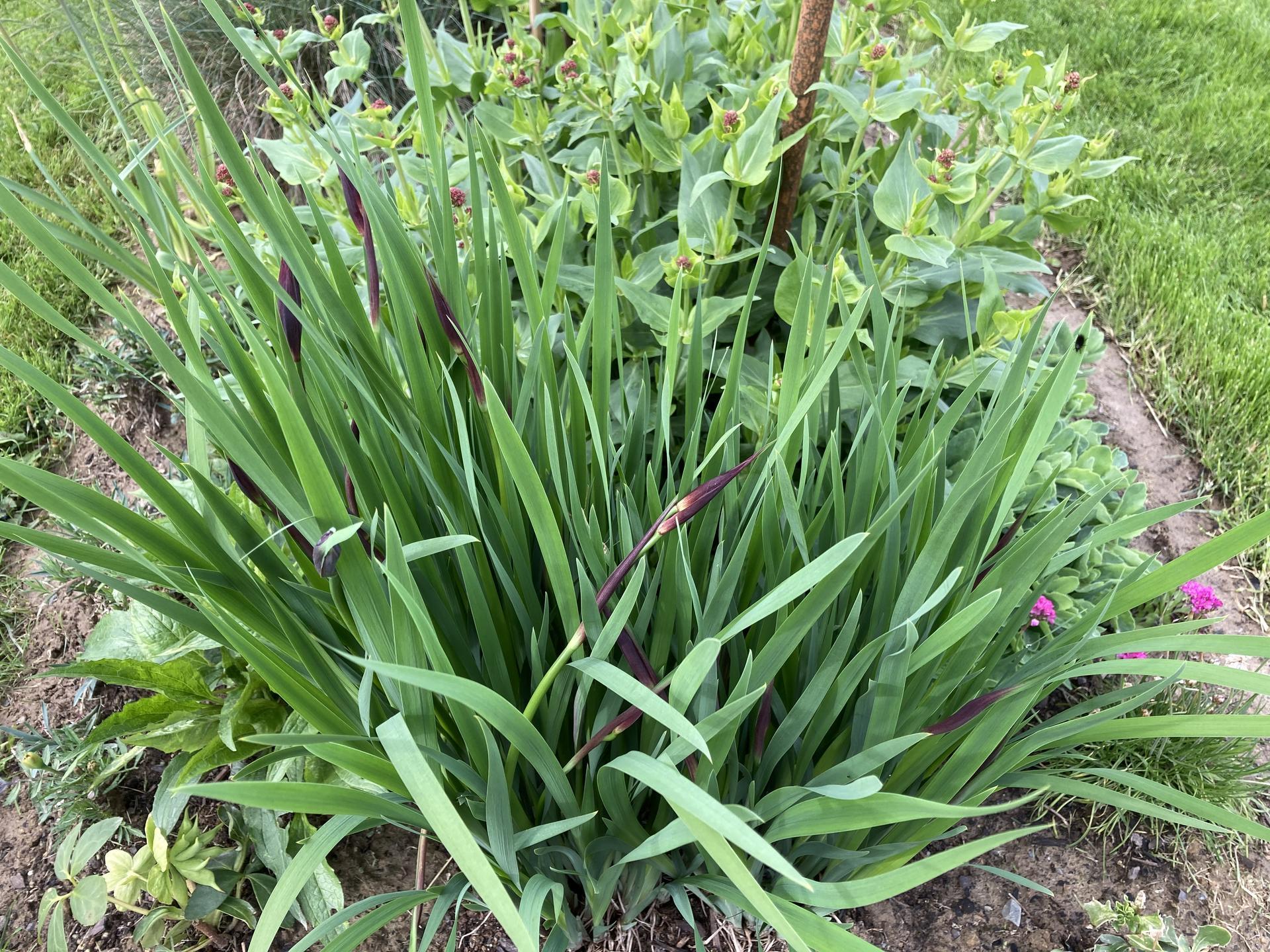 Šestý rok zahradničím - Hani, až letos pokvetou :)